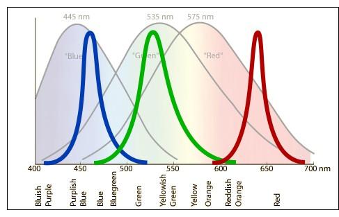 LUYOR-3260荧光蛋白激发光源光谱图