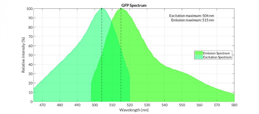 GFP蛋白的性能和GFP蛋白观察常见问题